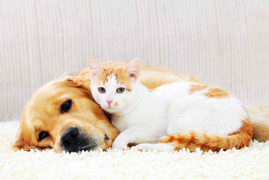 Ajudar a causa animal: entenda o guia completo