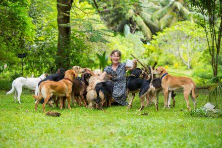 como ajudar ONGs de animais